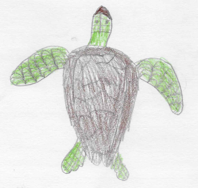 gw blog angus ml green turtle