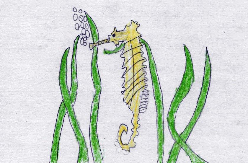 gw blog angus ml seahorse