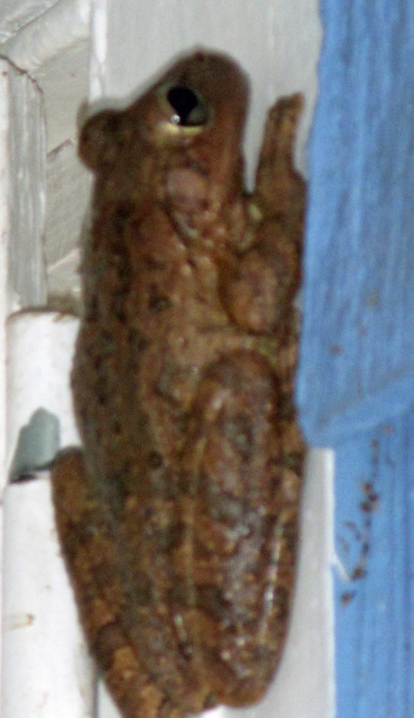 gw blog shutter frog