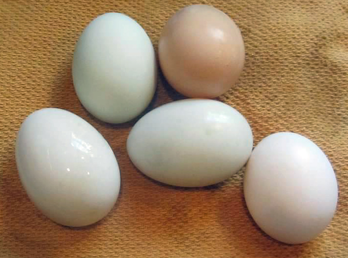 GW Blog Chicken Eggs Clean - Crop