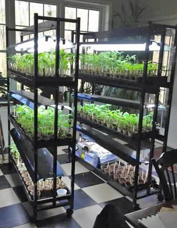 GW Blog Gardening Light - Crop